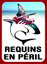 Requin en péril